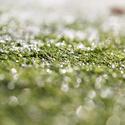 東海地方の冬ゴルフでグリーンメンテナンスがしっかりしているゴルフ場特集!