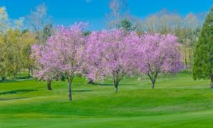 茨城県で春にお花見ができる桜のきれいなゴルフ場特集