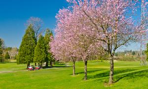 千葉県で春にお花見ができる桜のきれいなゴルフ場特集