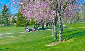 静岡県で春にお花見ができる桜のきれいなゴルフ場特集