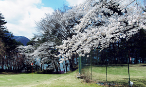 岐阜県で春にお花見ができる桜のきれいなゴルフ場特集
