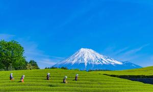静岡県で宿泊パックプランが選べるオススメのホテル併設のゴルフ場特集!